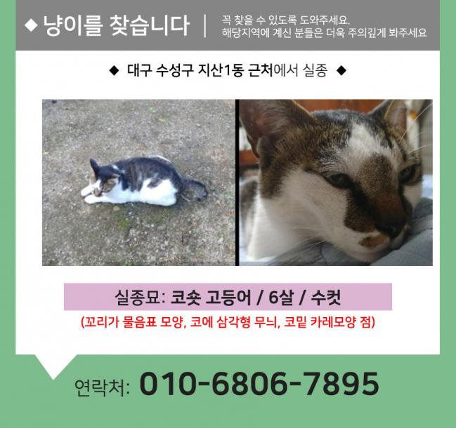 (9월)냥이찾기_세부3.jpg
