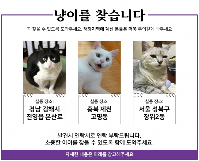 (11월) 냥이찾기_1_1.jpg