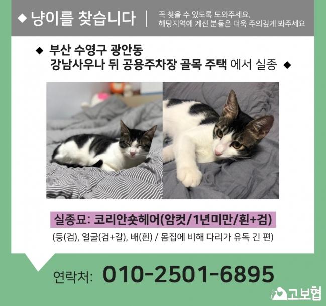 (12월) 냥이1_세부정보1.jpg