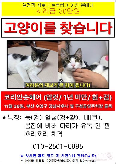 (12월) 냥이1_세부정보2-2.png