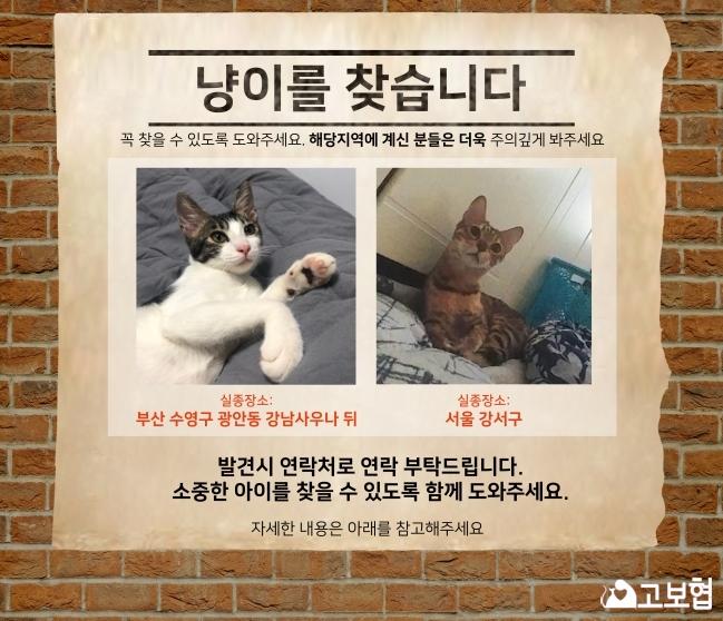 (12월) 냥이찾기_메인1.jpg