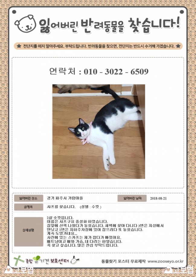 9월_냥이찾기_1.png