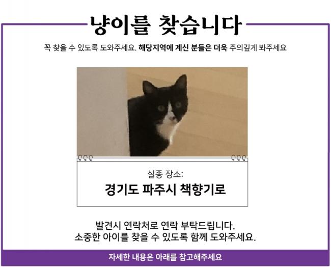 20.04 냥이찾기_1.jpg