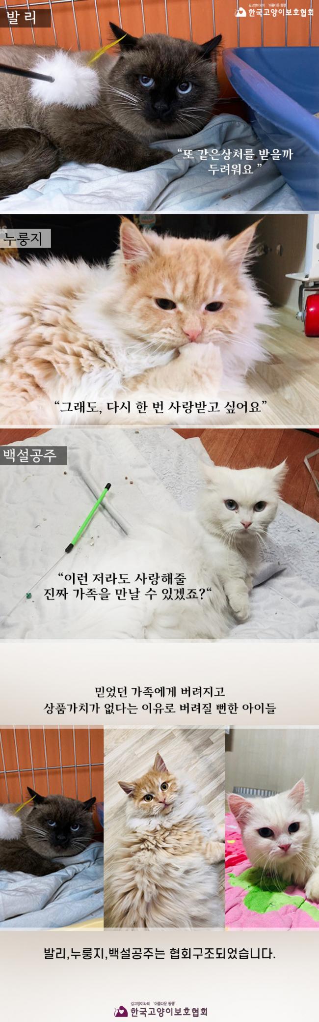 협회구조_발리,누룽지,백설공주.jpg