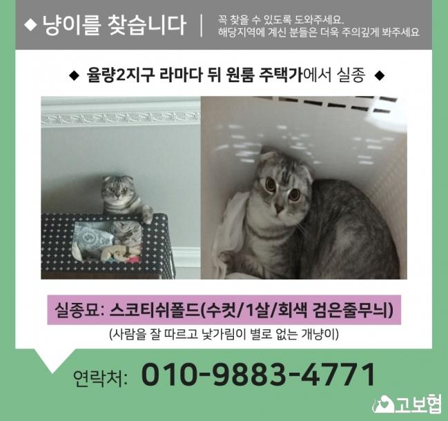 (6월)냥이찾기_세부.jpg