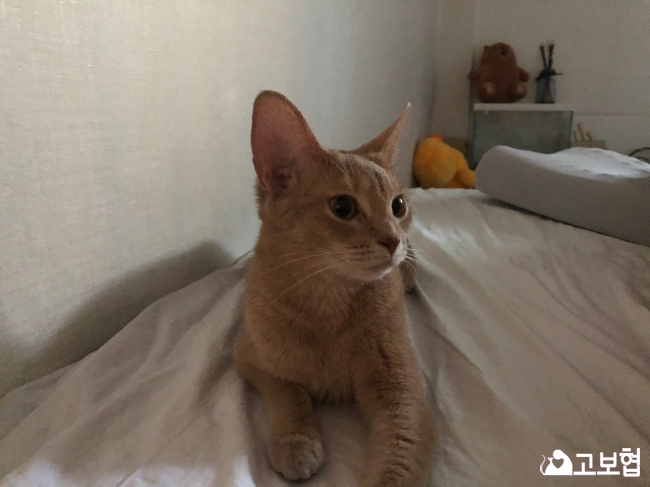 (10월) 냥이찾기3_세부정보3.jpg