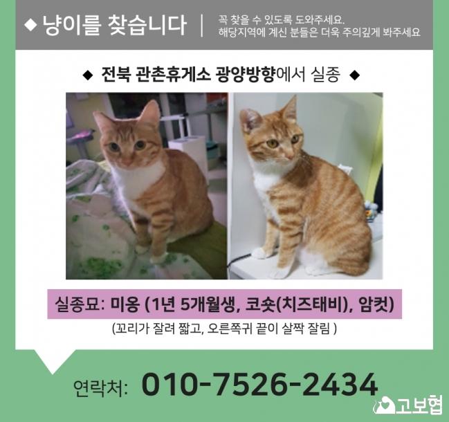 (10월) 냥이찾기1_세부정보2.jpg
