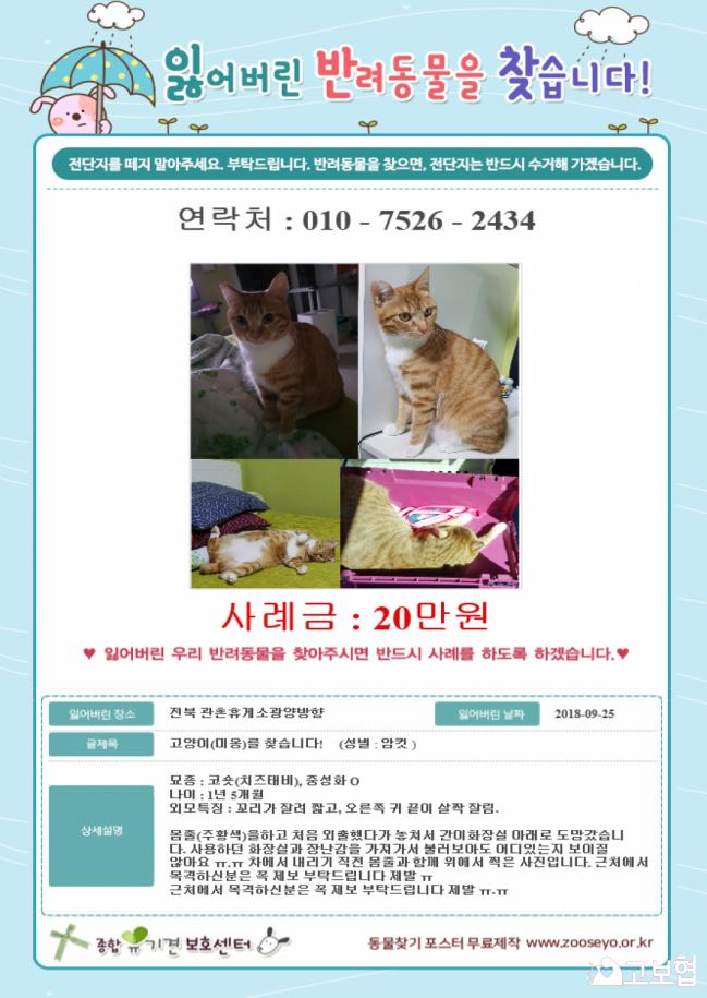 (10월) 냥이찾기1_세부정보2.png