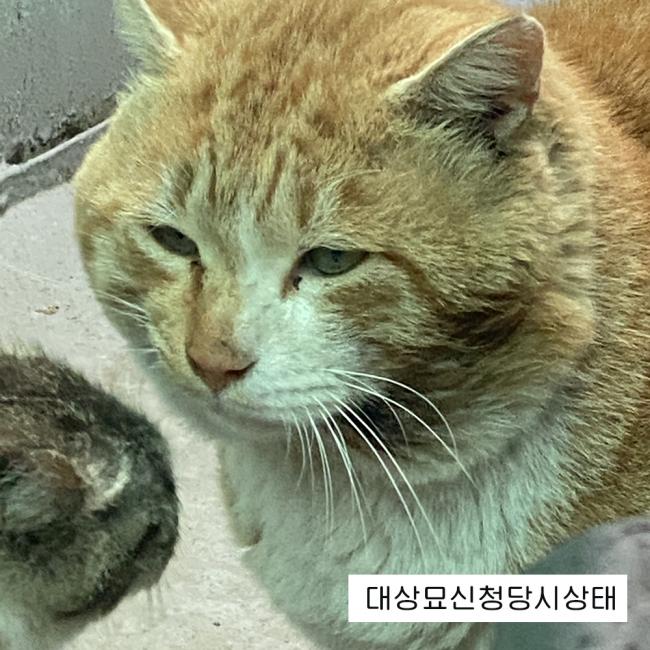 누렁이_상태.jpg