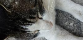 고양이 소화기능 치료 ...